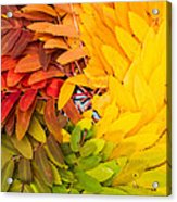 In Living Color Acrylic Print