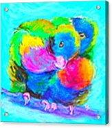 In Love Birds - Lorikeets Acrylic Print