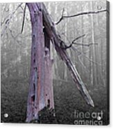 In Memory Of A Tree Acrylic Print