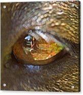 In My Dog's Eyes I'm Everything Acrylic Print