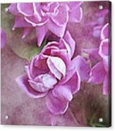 In Pink Acrylic Print