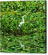 In Plain Sight Acrylic Print