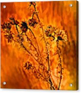 In Praise Of Weeds Acrylic Print