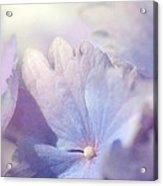 In Pursuit Of Purple 2 Acrylic Print