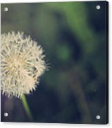 In The Afterglow Acrylic Print