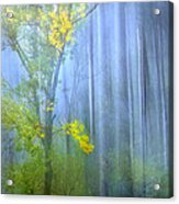 In The Blue Forest Acrylic Print
