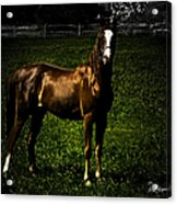 In The Corral 1 - Featured In Comfortable Art And Wildlife Groups Acrylic Print