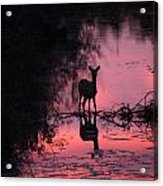 In The Creek Acrylic Print