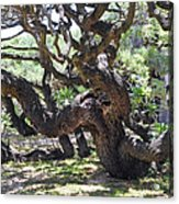 In The Depth Of Enchanting Forest Vi Acrylic Print