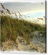 In The Dunes Acrylic Print