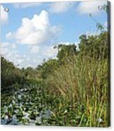 In The Everglades Acrylic Print