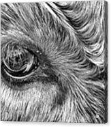 In The Eye Acrylic Print