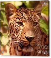 New Orleans In The Eyes Of The Leopard Acrylic Print