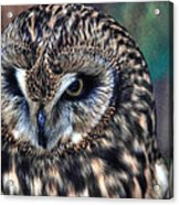 In The Eyes Of The Owl Acrylic Print