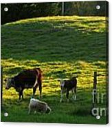 In The Field Acrylic Print by Randi Shenkman