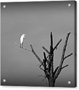 In The Forest - Black And White Acrylic Print