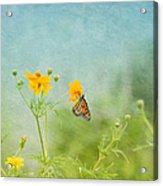 In The Garden - Monarch Butterfly Acrylic Print