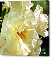 Sunny Rose Garden Acrylic Print