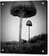 In The Land Of Mushrooms Acrylic Print