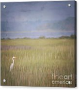 In The Marsh  Acrylic Print