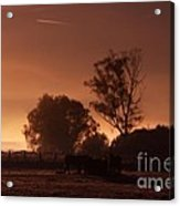 In The  Morning Light Acrylic Print