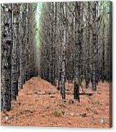 In The Pines Acrylic Print by Bob Jackson