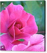 In The Pink Acrylic Print by Rona Black