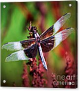 In The Red Acrylic Print