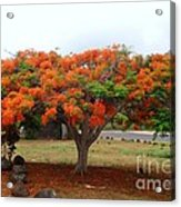 In The Shade Of The Poincianas Acrylic Print