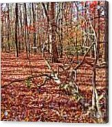 In The Shadows Of Fall 1 Acrylic Print