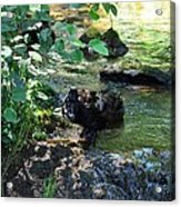 In The Shadows Of The Creek Acrylic Print