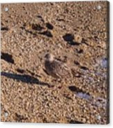In The Stone Surf Gravel Cape May Nj Acrylic Print