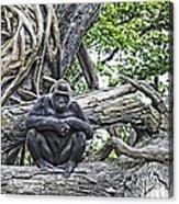 In The Treetop Acrylic Print