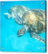 In The Turquoise Blue Acrylic Print