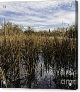 In The Weeds Acrylic Print by David Taylor
