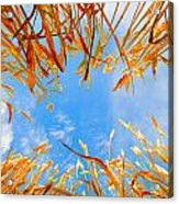 In The Wheat Acrylic Print by Alexey Stiop
