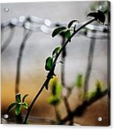 In The Wire  Acrylic Print