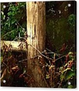 In The Woods By The River Acrylic Print