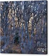 In The Woods V2 Acrylic Print
