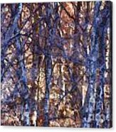 In The Woods V5 Acrylic Print