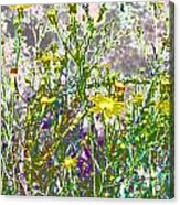Incandescent Daisies Acrylic Print