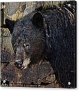 Inconspicuous Bear Acrylic Print