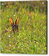 Inconspicuous Acrylic Print