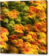 Indian Blanket Psychedelic Acrylic Print