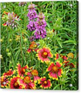 Indian Blankets And Lemon Horsemint Acrylic Print