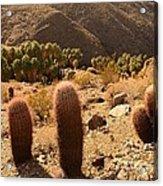 Indian Canyon Acrylic Print