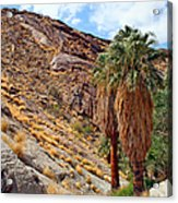 Indian Canyons View With Two Palms Acrylic Print