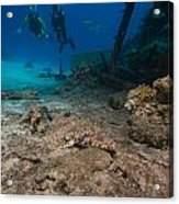 Indian Ocean Crocodilefish Papilloculiceps Longiceps In The Red Sea. Acrylic Print