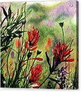 Indian Paint Brush Acrylic Print
