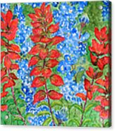 Indian Paintbrush And Bluebonnets Acrylic Print